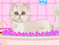 Persian Cat Princess Spa Salon